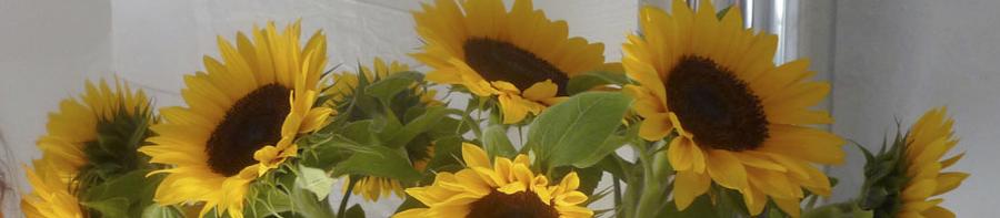 banner-zonnebloemen