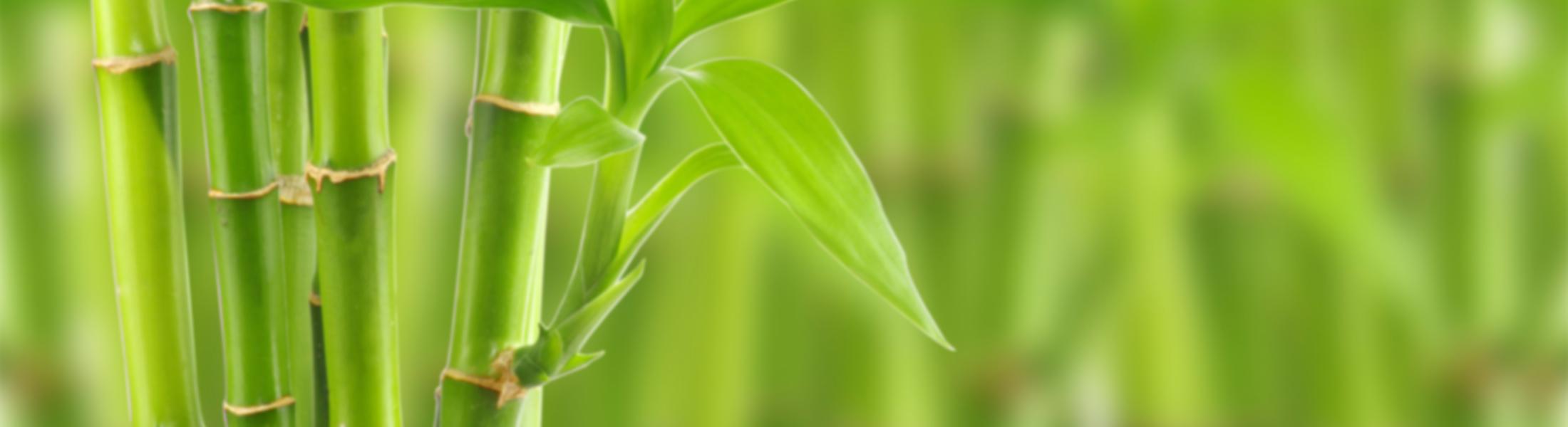 blurred-bamboo
