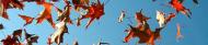 banner-falling leaves 1