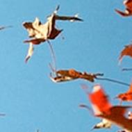 banner-falling leaves 2