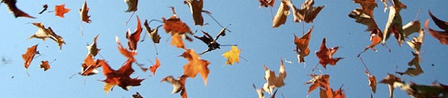 banner-falling leaves 3
