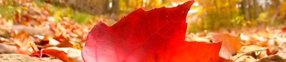 banner-herfst bos