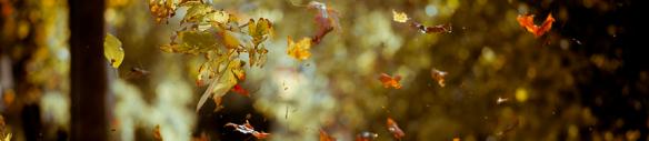 banner-vallende bladen 2