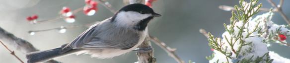 banner-winter vogeltje